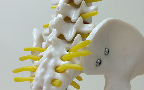 Free spinal health check